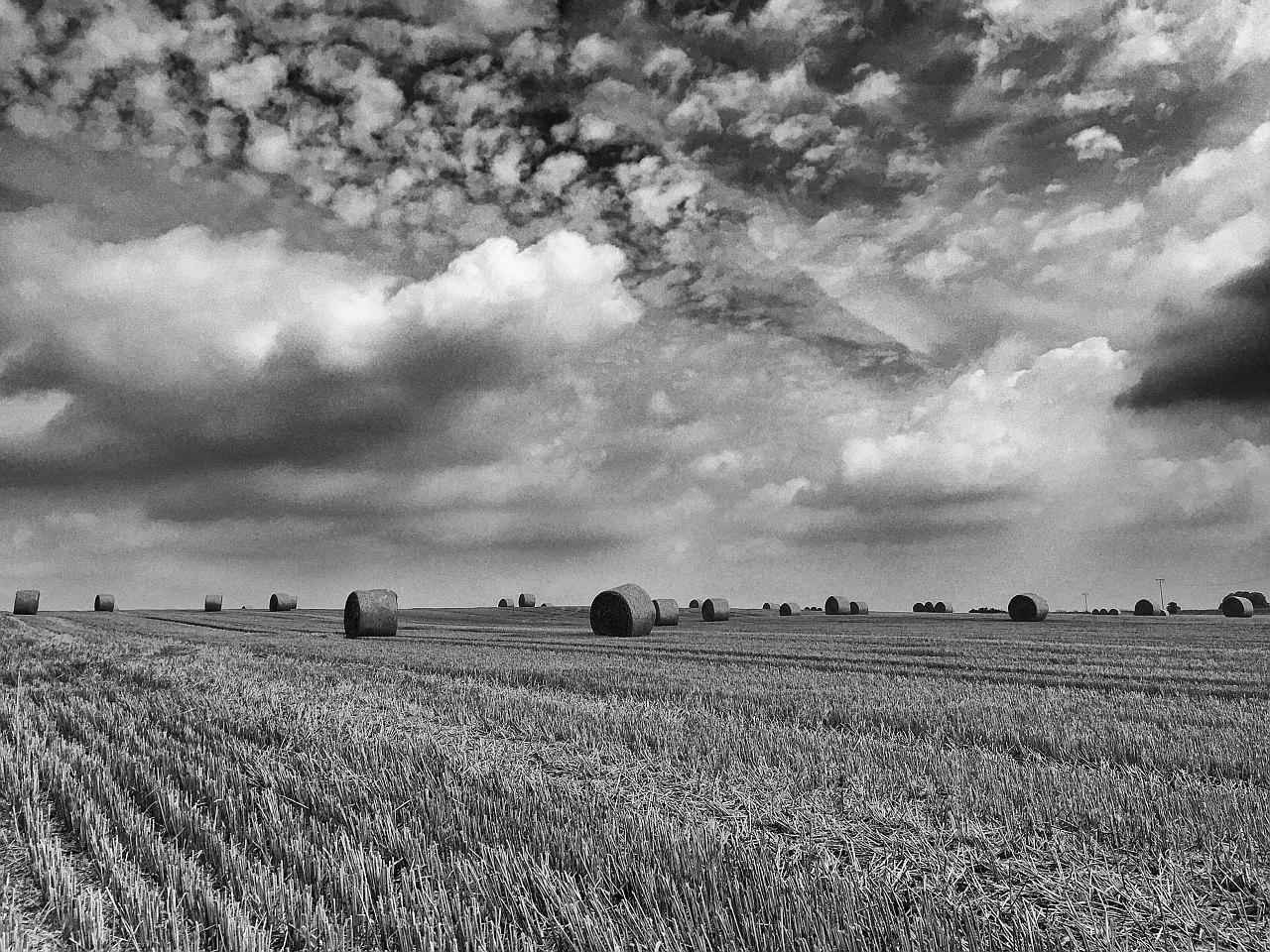 Spätsommer - Feld bei Drößnitz