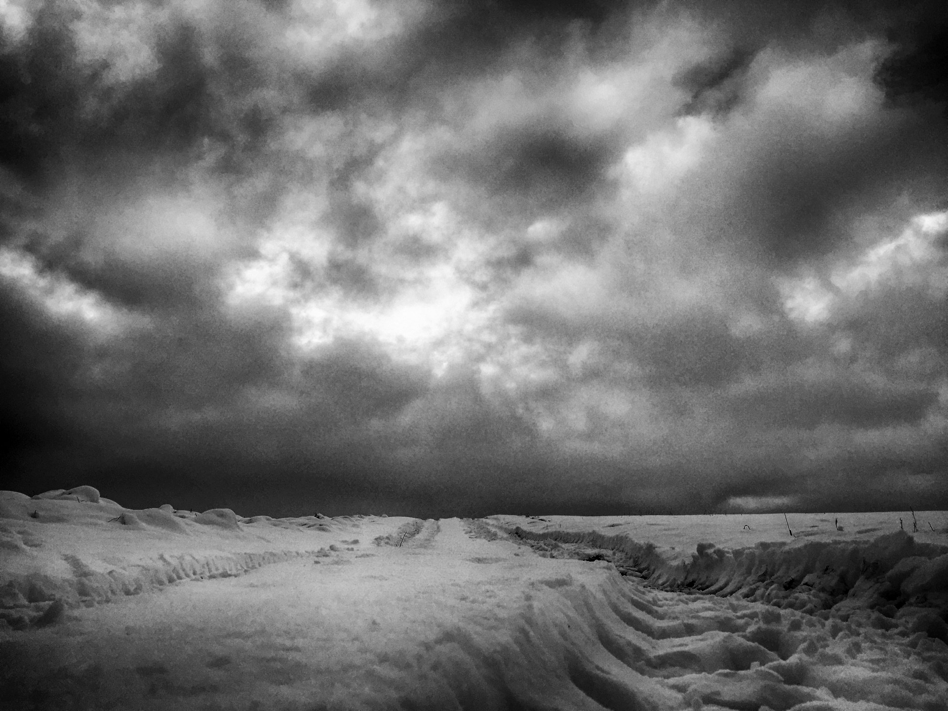A black and white winter day