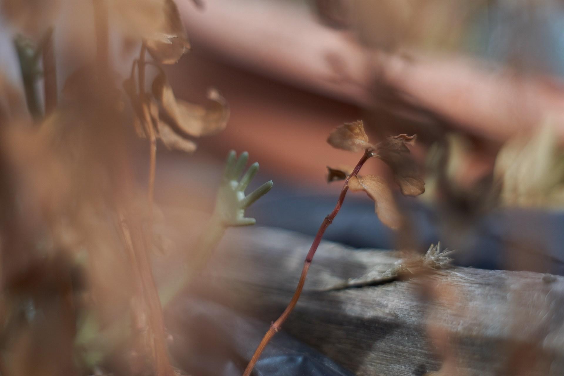 Frühlingshand