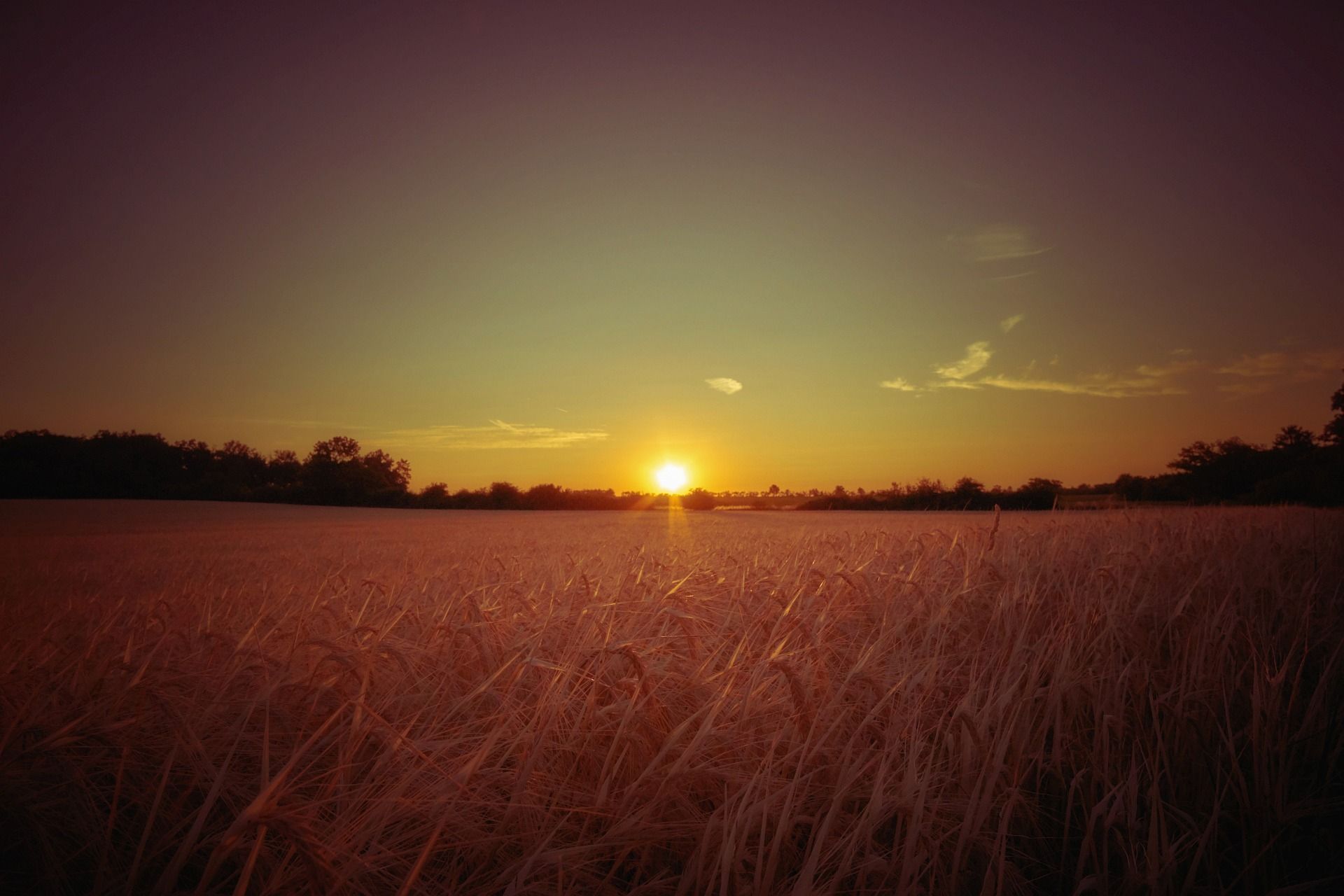 Sunrise in a summer field